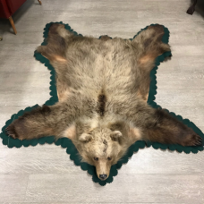 Bear rug with detailed head