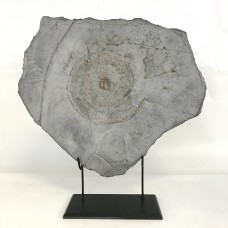 Large Ammonite stone on a Custom Stand