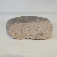 Fossil – Oviraptor Egg